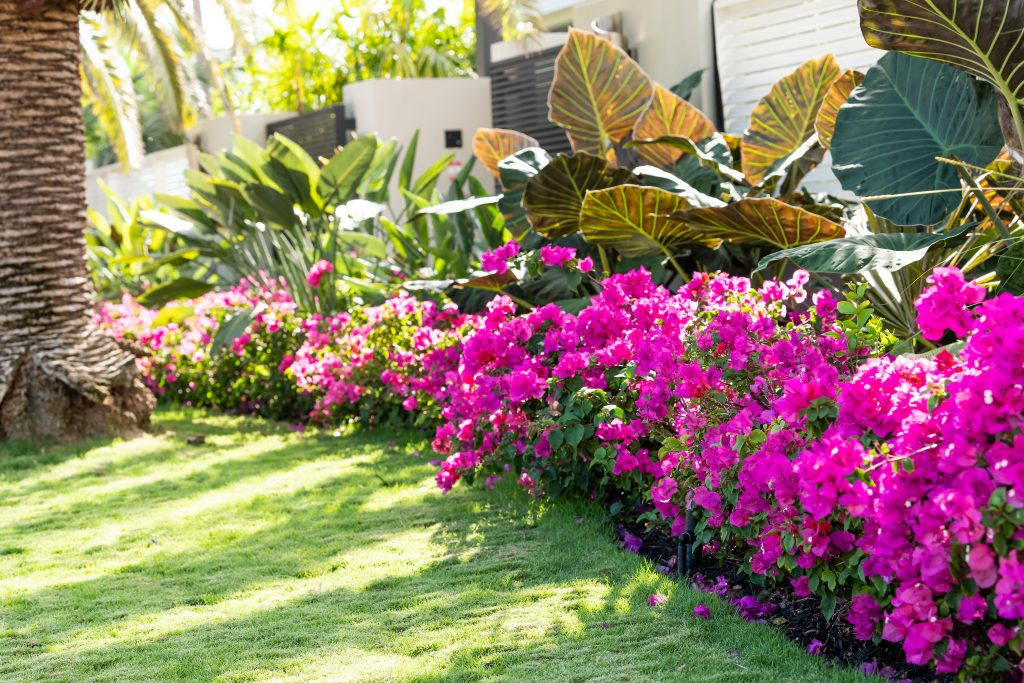 Fort Myers Landscape Services